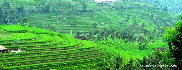 Jatiluwih Rice Terrace Bali Tourist Attractions World Heritages